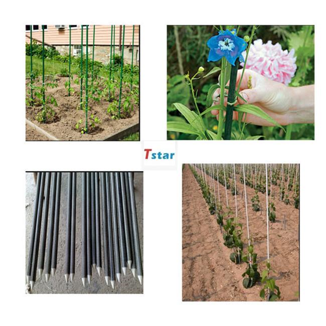 High strength greenhouse tent / planting fruit tree  stake support fiberglass rod / stick / pole