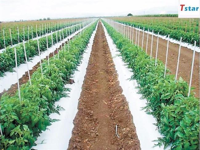 High strength fiber glass grape tree vineyard stake fiberglass rod with factory price